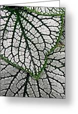 Leaf Abstract 19 Greeting Card