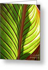 Leaf Abstract  23 Greeting Card