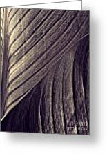 Leaf Abstract  24  Sepia   Greeting Card