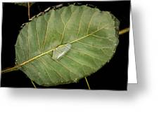 Leaf And Water Greeting Card