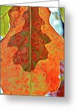 Leaf Behind Greeting Card