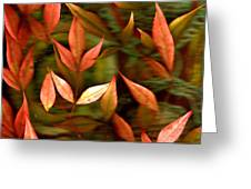 Leaf Collage Photo Greeting Card