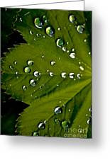 Leaf Covered In Raindrops Greeting Card