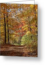 Leaf Covered Path Greeting Card by Kathy DesJardins