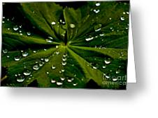 Leaf Covered With Water Droplets Greeting Card