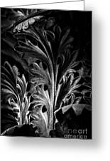 Leaf Detail 2 Black And White Greeting Card