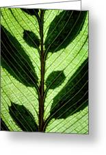 Leaf Detail Greeting Card