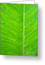 Leaf Detail Greeting Card