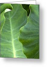 Leaf Edges Greeting Card