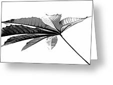 Leaf In Black And White Greeting Card