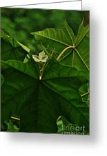 Leaf In The Middle Greeting Card