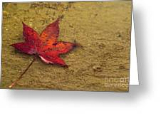 Leaf In The Rain Nature Photograph Greeting Card
