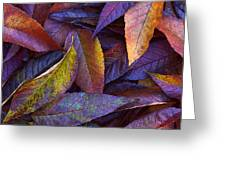 Leaf Ink Photo Designs  Greeting Card