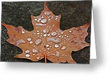 Leaf It Be Greeting Card