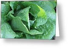 Leaf Lettuce Part 4 Greeting Card