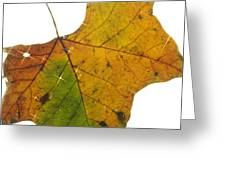 Leaf Light Greeting Card