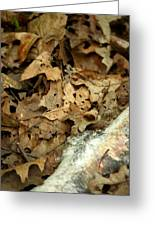 Leaf Litter Greeting Card