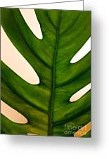Leaf Greeting Card
