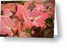 Leaf Of Color Greeting Card