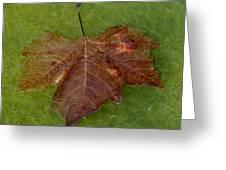 Leaf On Algae Greeting Card