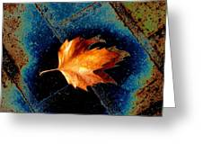 Leaf On Bricks 5 Greeting Card