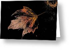 Leaf On Bricks Greeting Card