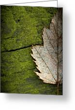 Leaf On Green Wood Greeting Card