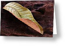 Leaf On Log- St Lucia Greeting Card