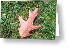 Leaf Resisting The Rain Greeting Card