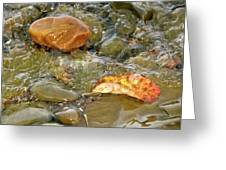 Leaf, Rock Leaf Greeting Card