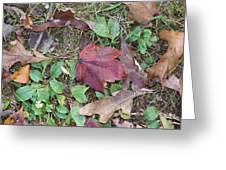 Leaf Standing Out In A Crowd Greeting Card