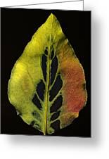 Leaf Still Life Greeting Card
