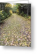 Leaf-strewn Trail Greeting Card