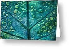 Leaf Study #4 Greeting Card