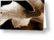 Leaf Study In Sepia Greeting Card