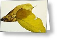 Leaf Symmetry Greeting Card