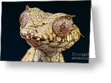 Leaf-tailed Gecko Greeting Card
