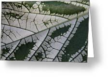 Leaf Variegated 1 Greeting Card
