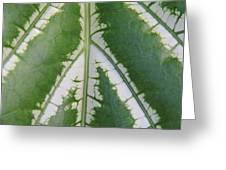 Leaf Variegated 2 Greeting Card