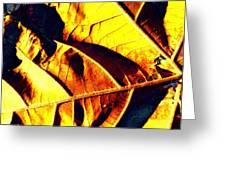 Leaf Veins Abstract Greeting Card