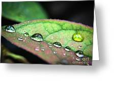 Leaf Veins And Raindrops Greeting Card