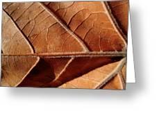 Leaf Veins Greeting Card