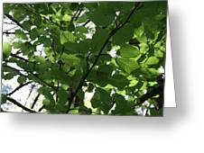 Leaf Xray Greeting Card