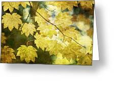 Leaf Zen T Greeting Card