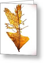 Leafcarving Greeting Card