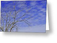 Leafless Greeting Card