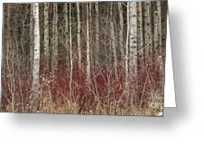 Leafless Color Greeting Card
