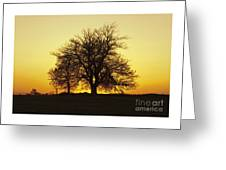Leafless Tree Against Sunset Sky Greeting Card