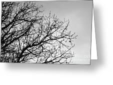 Leafless Twig Greeting Card