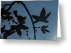 Leafs Backlit Greeting Card